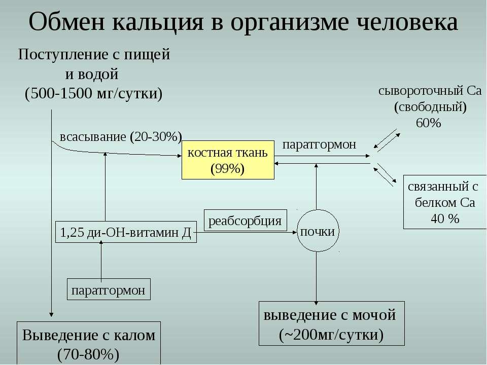 Выведение с калом (70-80%) Обмен кальция в организме человека Поступление с п...