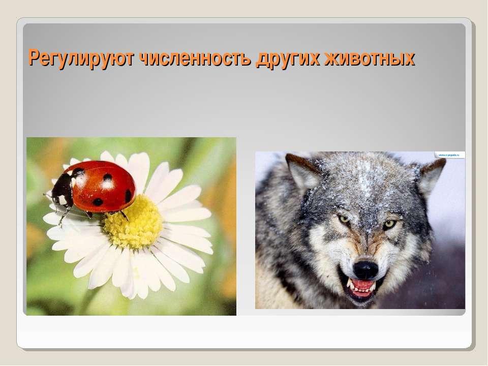 Регулируют численность других животных