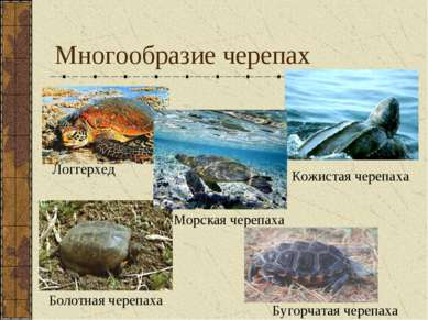 Многообразие черепах Логгерхед Кожистая черепаха Морская черепаха Болотная че...