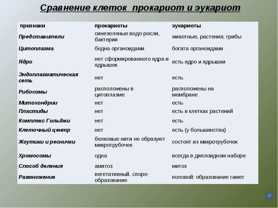 Сравнение клеток прокариот и эукариот признаки прокариоты эукариоты Представ...
