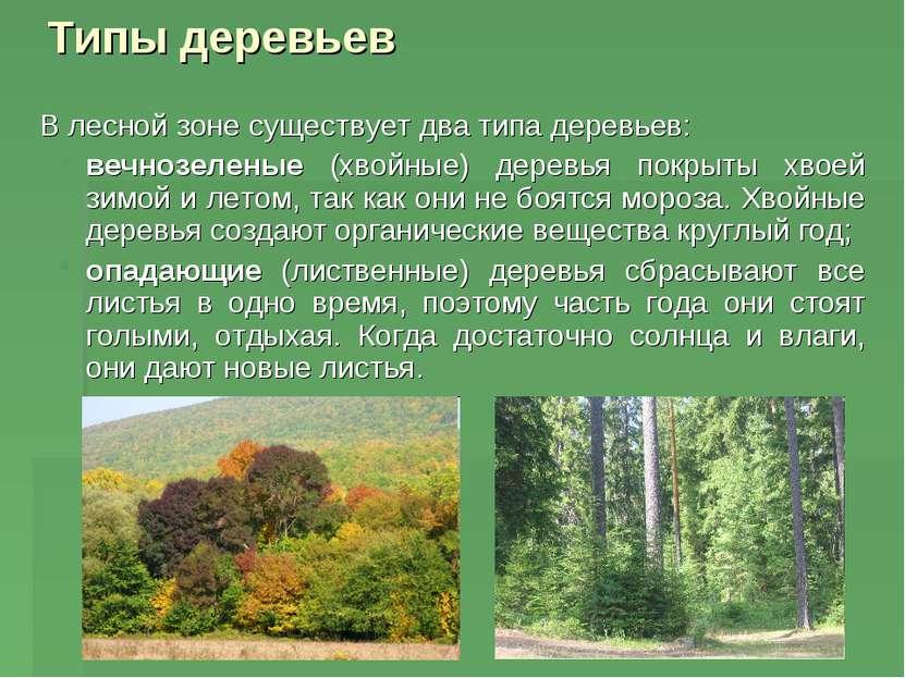 Типы деревьев В лесной зоне существует два типа деревьев: вечнозеленые (хвойн...
