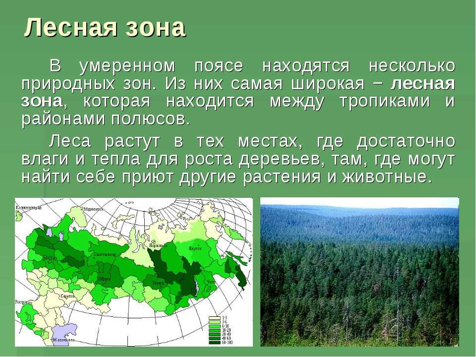 Лесная зона В умеренном поясе находятся несколько природных зон. Из них самая...