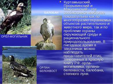 Куртамышский, Прорывинский и Макушинский - эти зоозаказники наиболее показате...