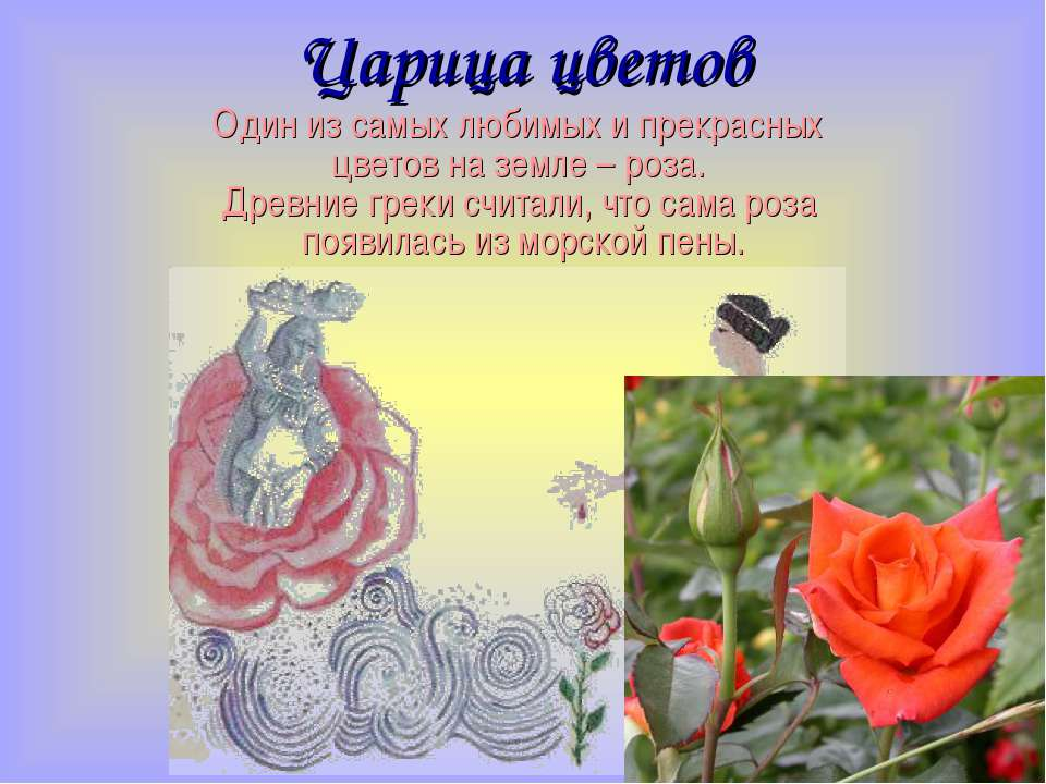 Царица цветов Один из самых любимых и прекрасных цветов на земле – роза. Древ...