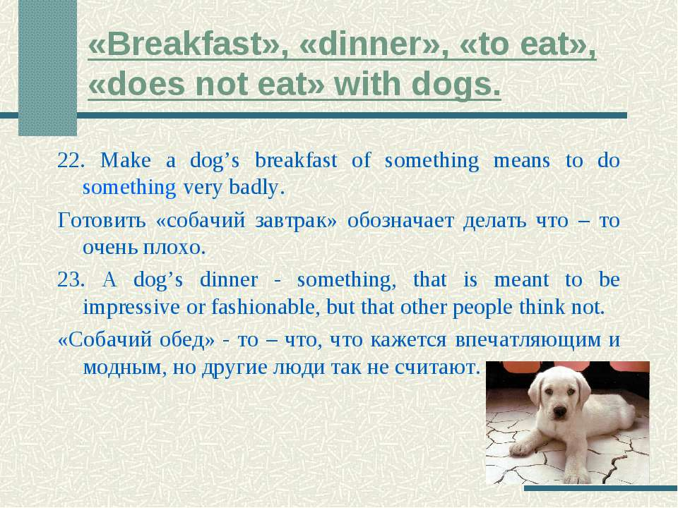 «Breakfast», «dinner», «to eat», «does not eat» with dogs. 22. Make a dog's b...