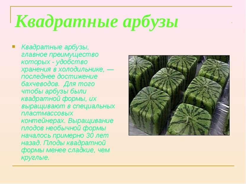 Квадратные арбузы Квадратные арбузы, главное преимущество которых - удобство ...