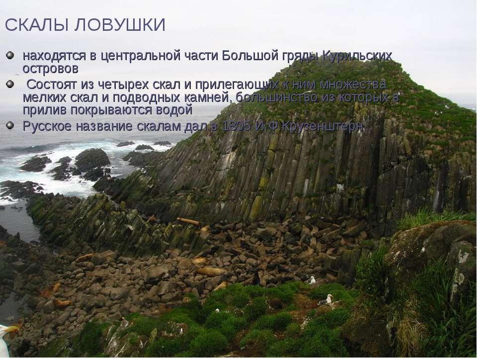 СКАЛЫ ЛОВУШКИ находятся в центральной части Большой гряды Курильских островов...