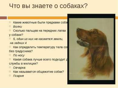Что вы знаете о собаках? Какие животные были предками собак? Волки Сколько па...