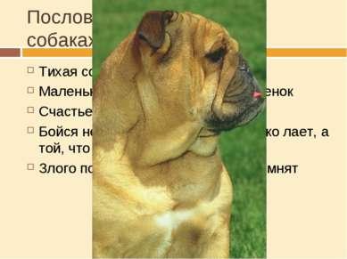 Пословицы и поговорки о собаках Тихая собака пуще кусает Маленькая собачка до...
