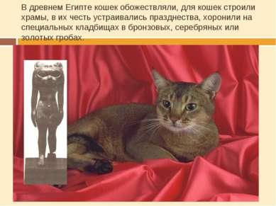 В древнем Египте кошек обожествляли, для кошек строили храмы, в их честь устр...