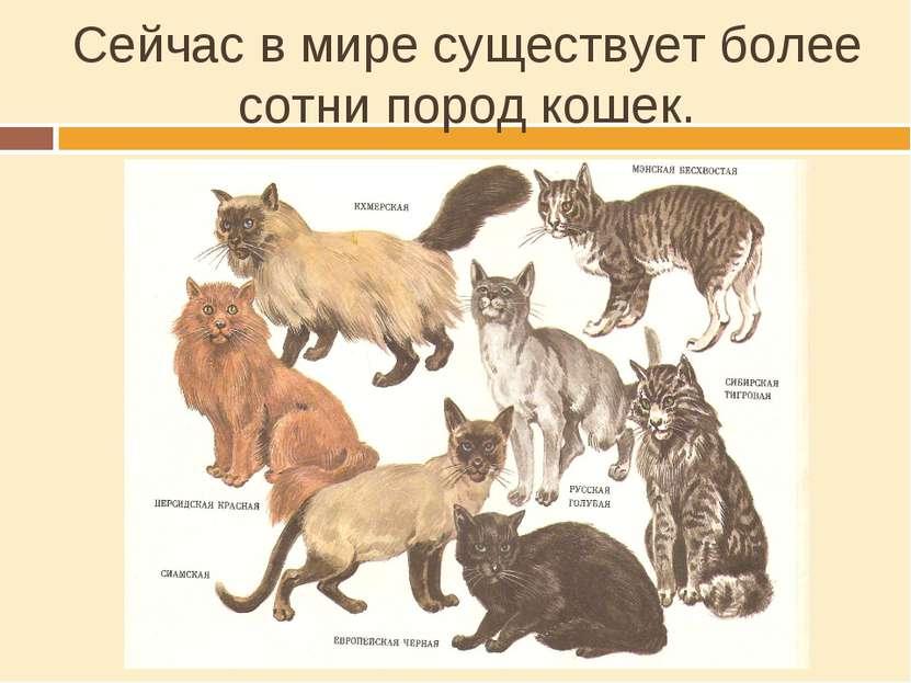 Сейчас в мире существует более сотни пород кошек.