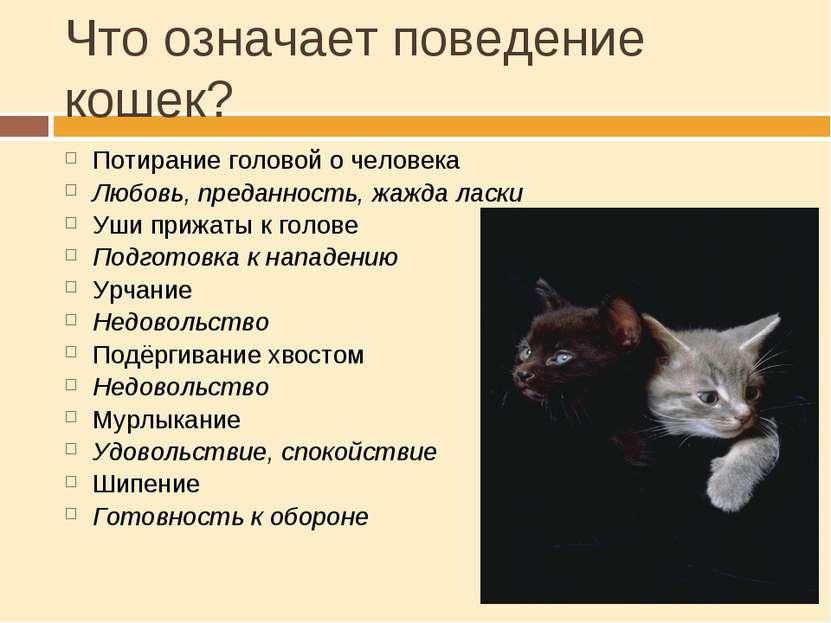 Что означает поведение кошек? Потирание головой о человека Любовь, преданност...