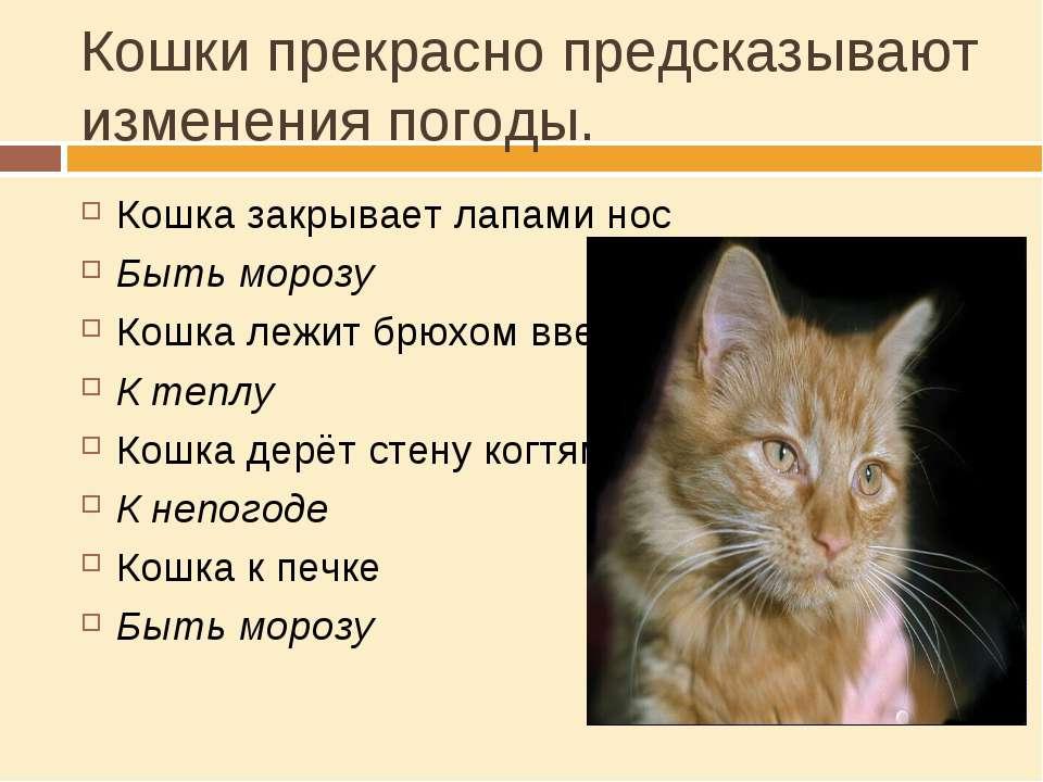 Кошки прекрасно предсказывают изменения погоды. Кошка закрывает лапами нос Бы...