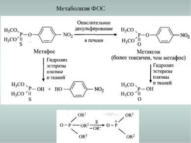 Метаболизм ФОС