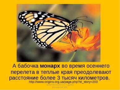 А бабочка монарх во время осеннего перелета в теплые края преодолевают рассто...