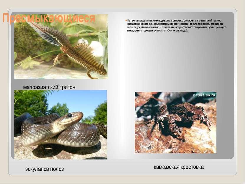 Из пресмыкающихся и земноводных в заповеднике отмеченымалоазиатский тритон, ...