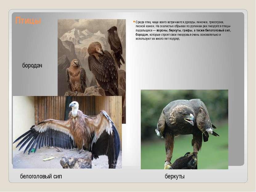 Птицы Среди птиц чаще всего встречаются дрозды, пеночки, трясогузки, лесной к...