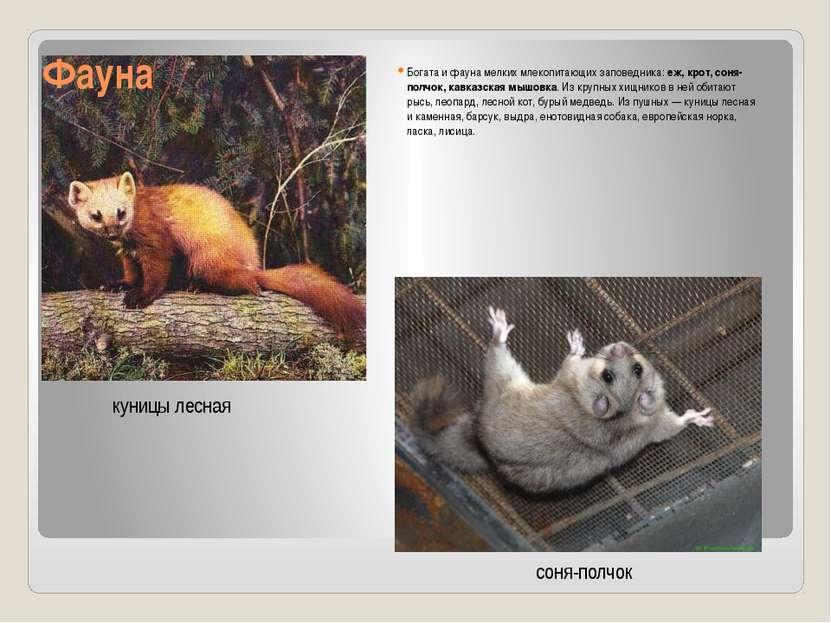 Фауна Богата и фауна мелких млекопитающих заповедника:еж, крот, соня-полчок,...