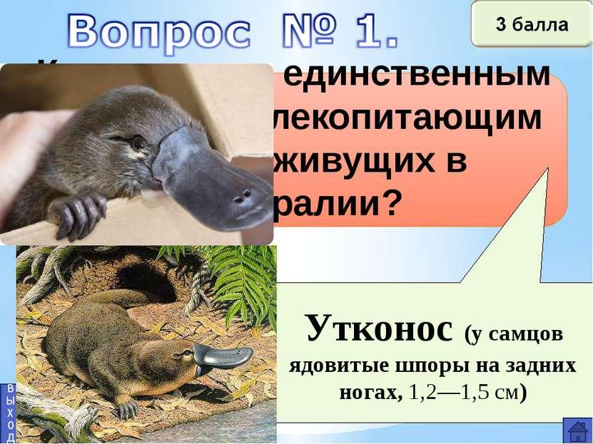 Вопрос №2 Озеро Эйр. Гора Косцюшко. выход 2 балла Самая низкая и самая высока...