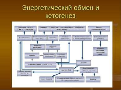 Энергетический обмен и кетогенез