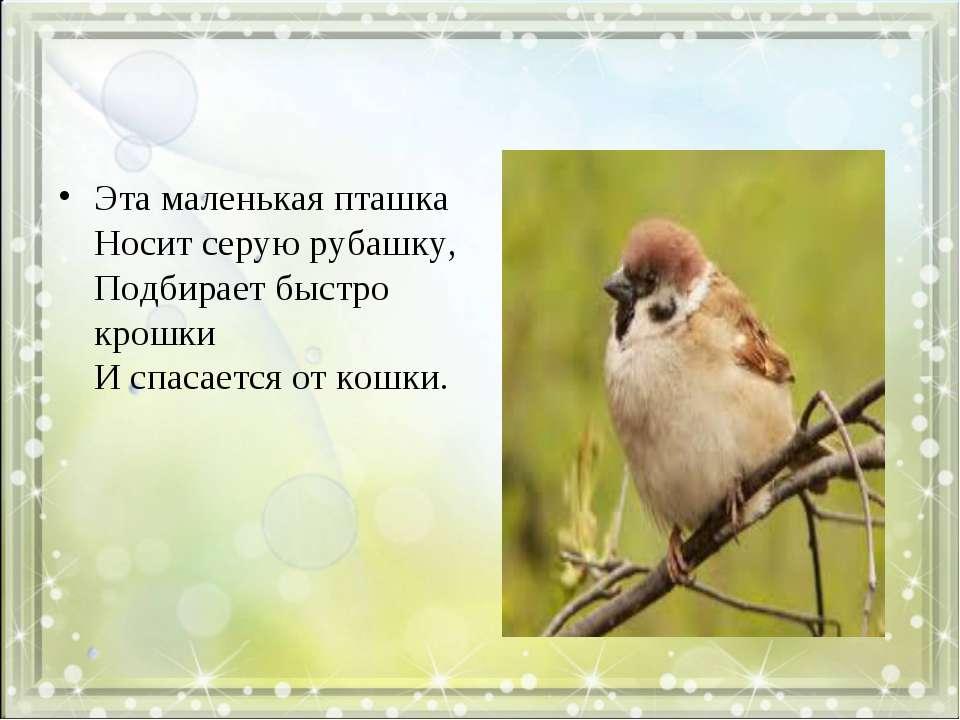 Эта маленькая пташка Носит серую рубашку, Подбирает быстро крошки И спасается...