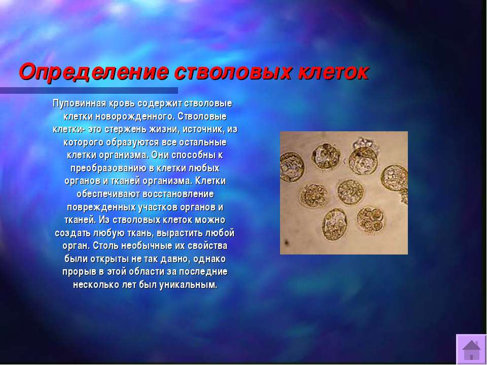 Определение стволовых клеток Пуповинная кровь содержит стволовые клетки новор...