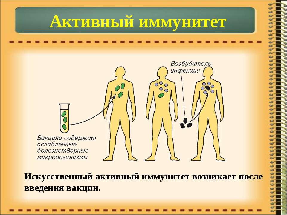 Активный иммунитет Искусственный активный иммунитет возникает после введения ...