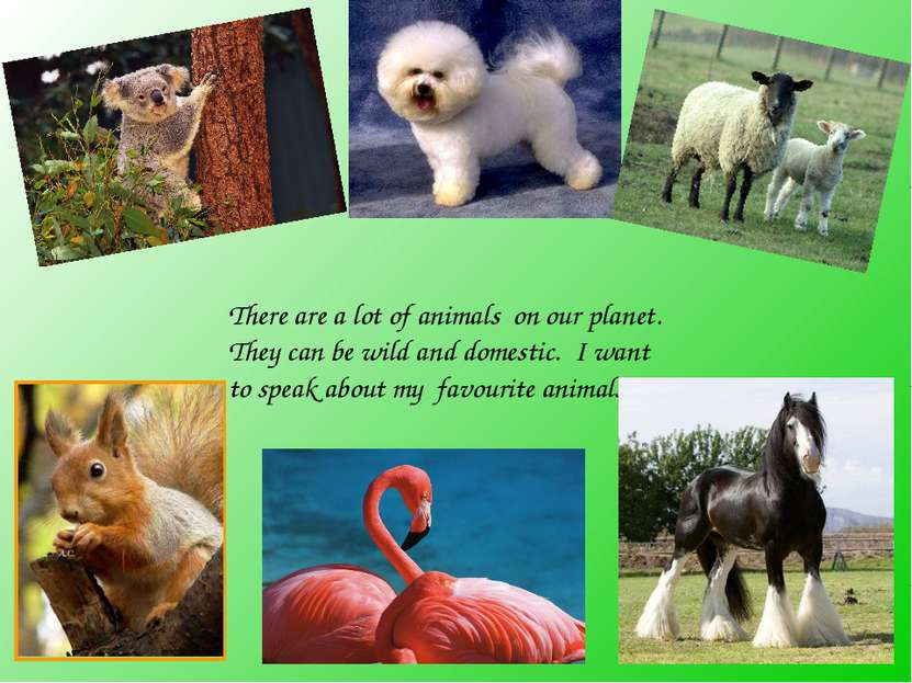 There are a lot of animals on our planet. They can be wild and domestic. I wa...