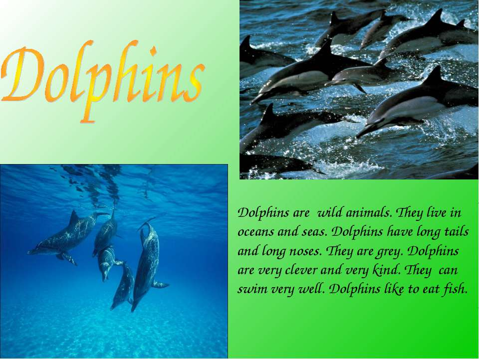 Dolphins are wild animals. They live in oceans and seas. Dolphins have long t...