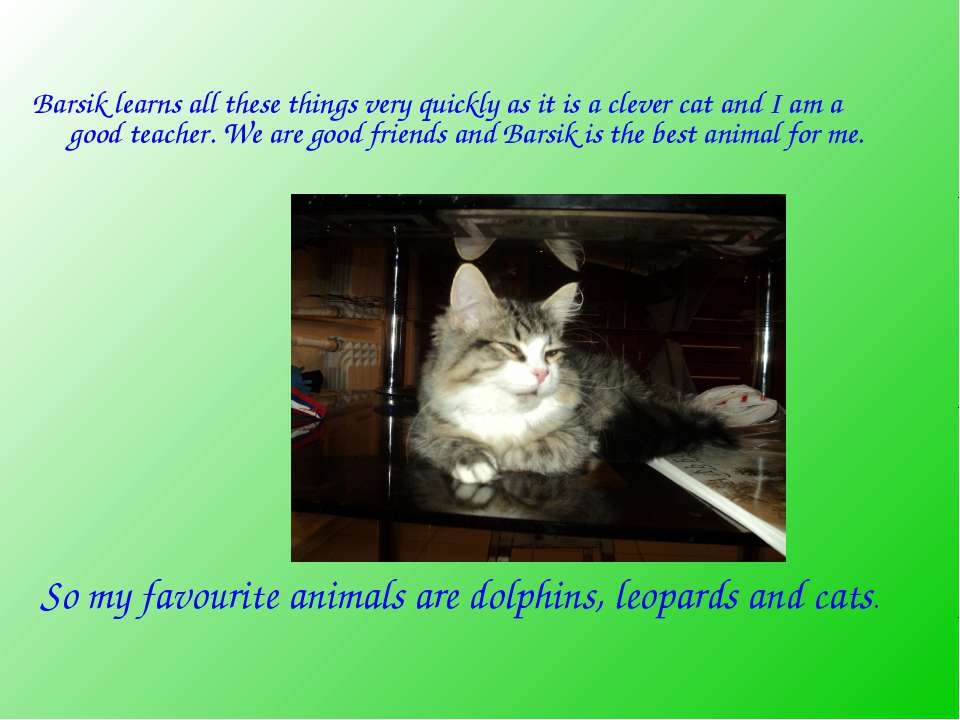 Barsik learns all these things very quickly as it is a clever cat and I am a ...
