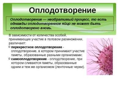 Оплодотворение — необратимый процесс, то есть однажды оплодотворенное яйцо не...