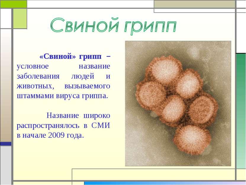 «Свиной» грипп – условное название заболевания людей и животных, вызываемого...