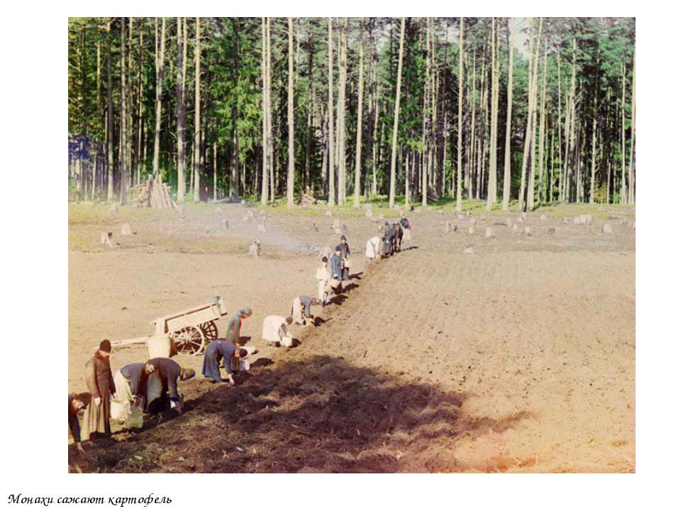 Монахи сажают картофель
