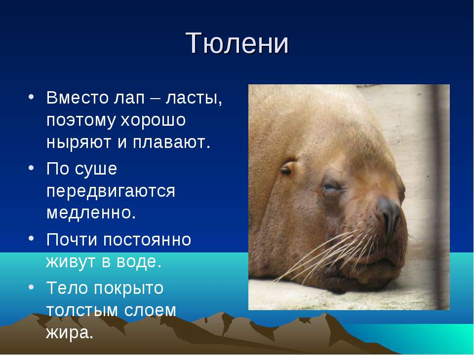 Тюлени Вместо лап – ласты, поэтому хорошо ныряют и плавают. По суше передвига...