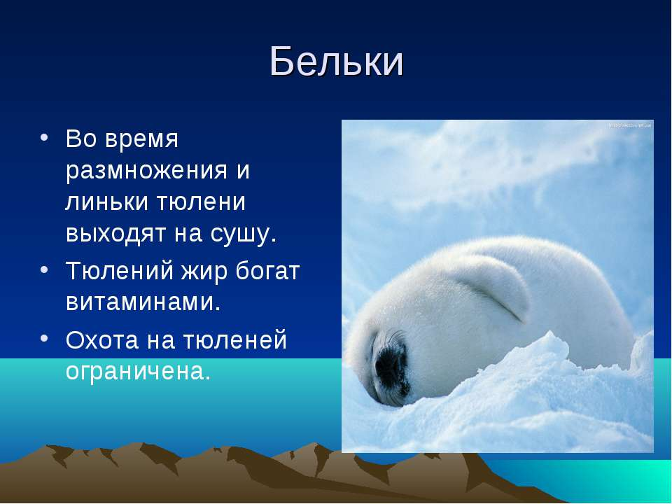 Бельки Во время размножения и линьки тюлени выходят на сушу. Тюлений жир бога...
