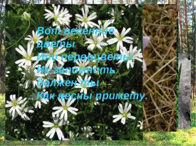 Вот весенние цветы Или первоцветы. Их запомнить должен ты Как весны примету.