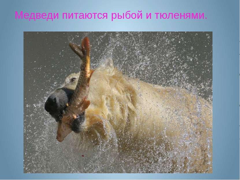 Медведи питаются рыбой и тюленями.