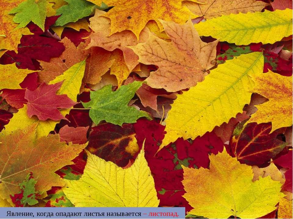 Явление, когда опадают листья называется – листопад.