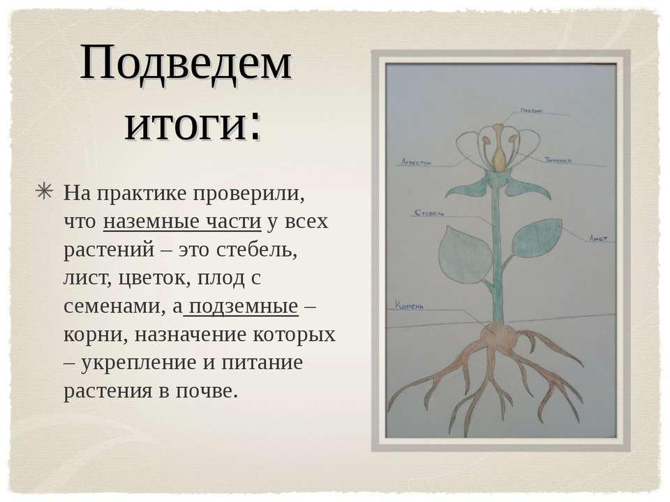 Подведем итоги: На практике проверили, что наземные части у всех растений – э...