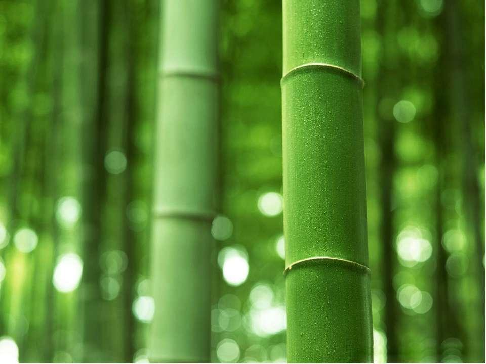 ИСТОРИЯ РУЧКИ Первая ручка была из бамбукового или трост-никового стебля. Оди...