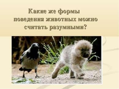 Какие же формы поведения животных можно считать разумными?