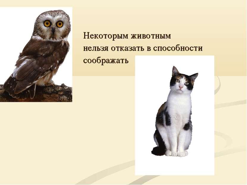 Некоторым животным нельзя отказать в способности соображать