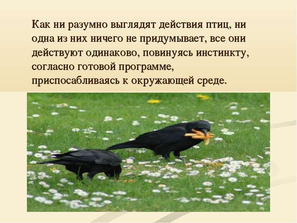 Как ни разумно выглядят действия птиц, ни одна из них ничего не придумывает, ...