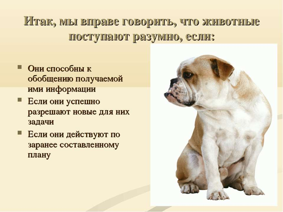 Итак, мы вправе говорить, что животные поступают разумно, если: Они способны ...