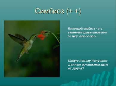 Симбиоз (+ +) Настоящий симбиоз – это взаимовыгодные отношения по типу «плюс-...