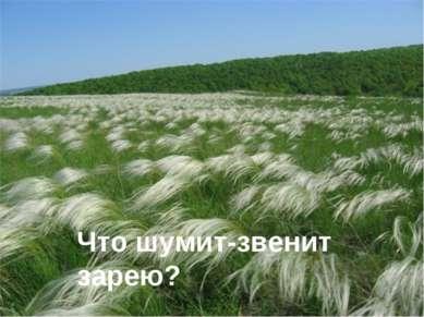 Что шумит-звенит зарею? (о ковыле в степи) Что шумит-звенит зарею?
