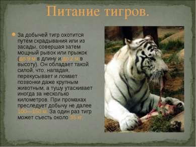 Питание тигров. За добычей тигр охотится путём скрадывания или из засады, сов...