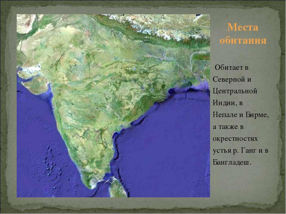 Обитает в Северной и Центральной Индии, в Непале и Бирме, а также в окрестнос...