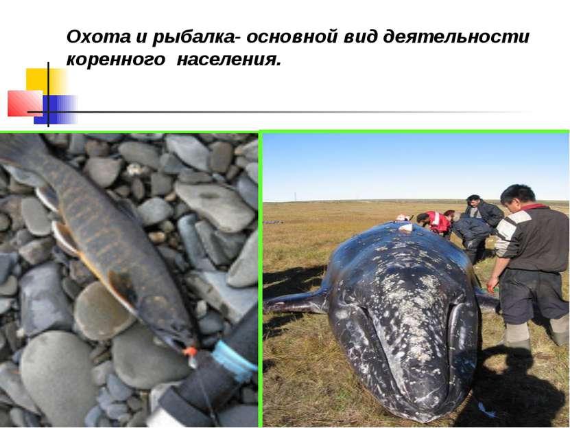 Охота и рыбалка- основной вид деятельности коренного населения.