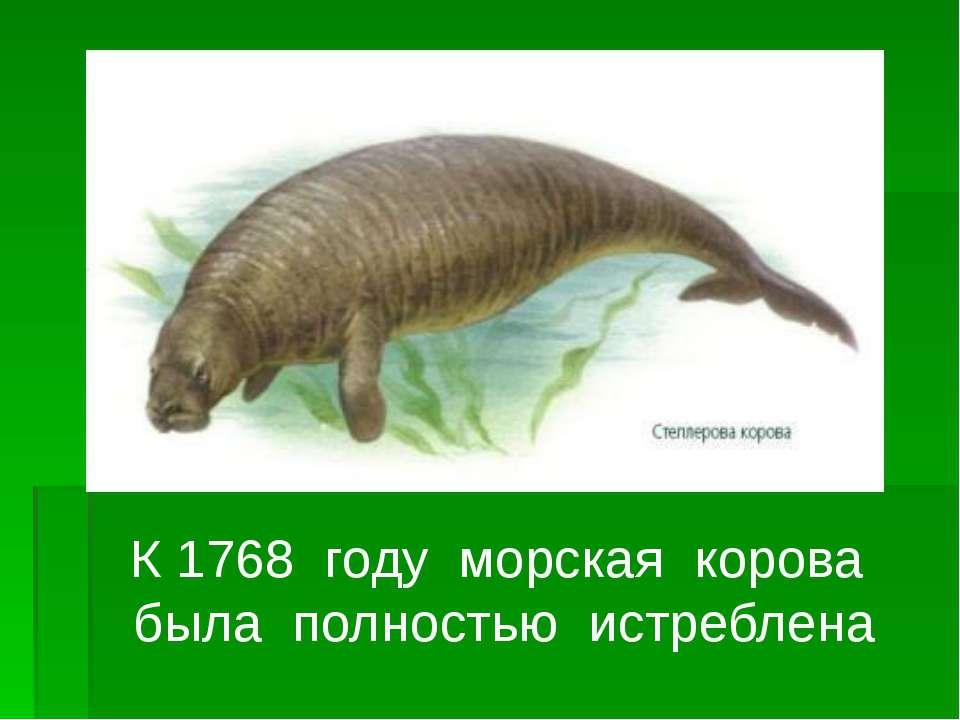 К 1768 году морская корова была полностью истреблена
